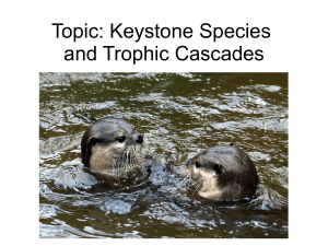Keystone species PPT