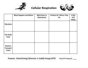 cell respiration graphic organizer