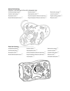 Animal and  Plant Cell Coloring 1