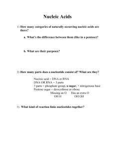 Nucleic Acids Worksheet