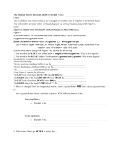 Heart Circulation worksheet 3
