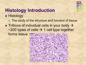 Histology Introduction