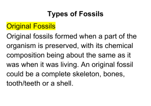 3. Types of Fossils