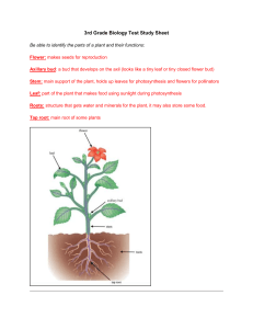3rd Grade Biology Test Review