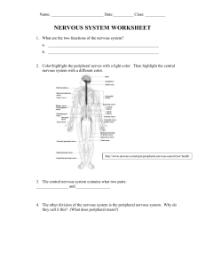 Nervous System Worksheet (1)