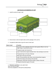 Leaft-structure-adaptations-worksheet-F