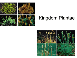 Plants PowerPoint