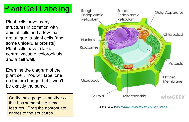 Copy of Cell Label Plant and Animal- Bio corner