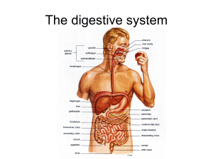 PPT_Review of Digestion