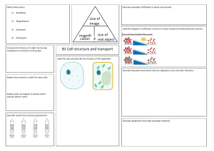 B1.1-Cell-structure-and-transport