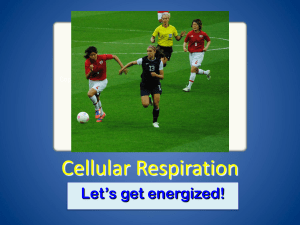 Respiration PowerPoint