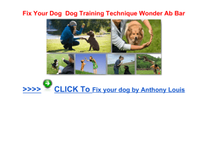 Fix Your Dog Dog Training Technique Wonder Ab Bar