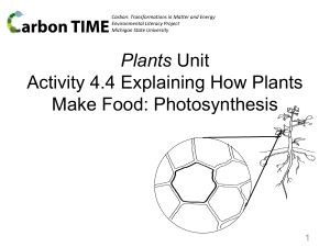 4.4 Explaining How Plants Make Food Photosynthesis